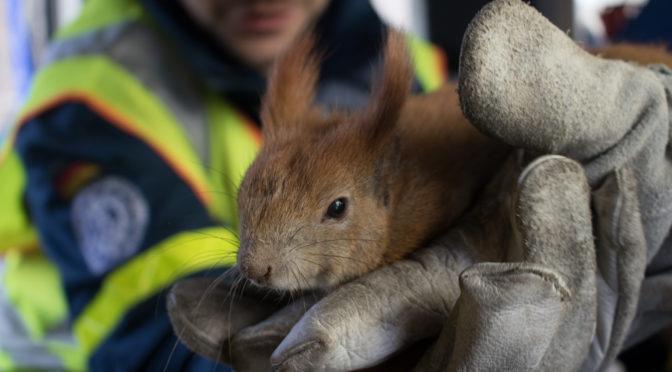 Niedlicher Patient – Eichhörnchen gerettet
